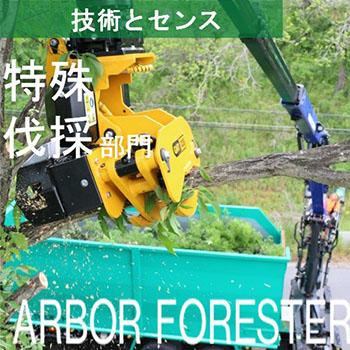 特殊伐採部門